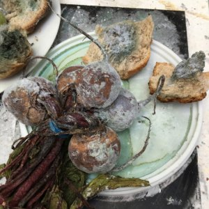 "Claire's ""mould experiments"" – real food, fake mould"
