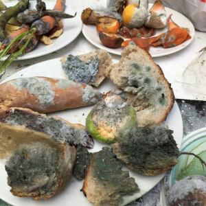 """Claire's """"mould experiments"""" – real food, fake mould"""